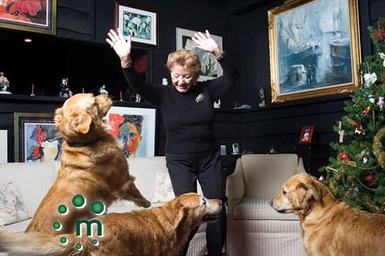Brighton S Dancing Dog Breeder Northumberlandnews Com