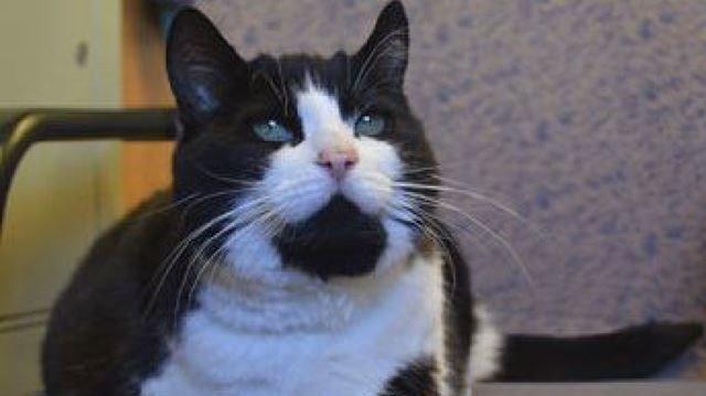 Humane Society investigating horrific abuse of cat in Oakville
