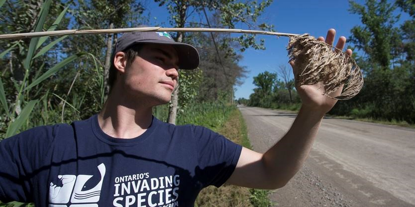Stopping the spread of invasive species in Scugog