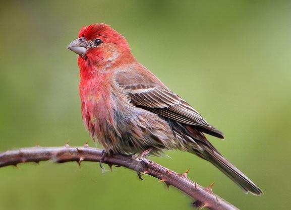 QUIZ: Can you name these common backyard birds ...
