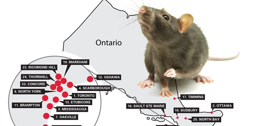 Rats Barries On Orkins Rattiest City List Simcoecom