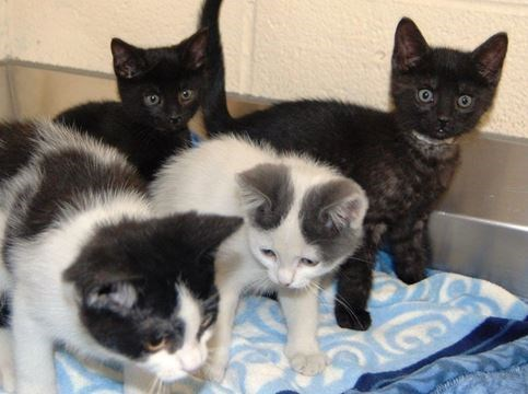 Overflowing Shelters Hold Cat And Kitten Sale Toronto Com