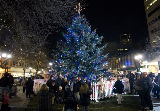 Wanted A 12 Metre Christmas Tree For Hamilton Thespec