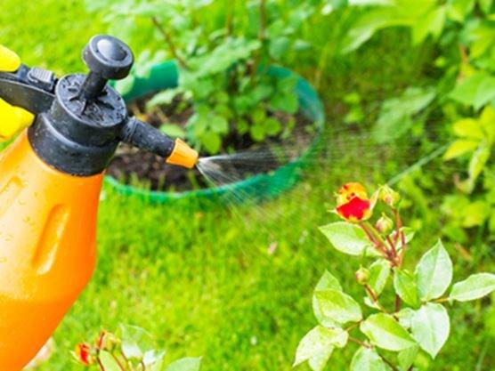 Organic pest control with beneficial nematodes for Beneficial nematodes for termites