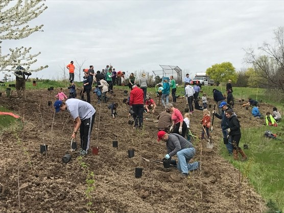 community tree planting at tuck park in burlington on april 21