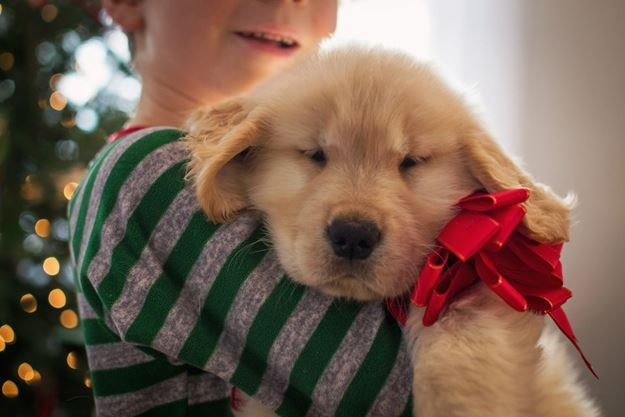opinion gary direnfeld we can t afford a christmas puppy