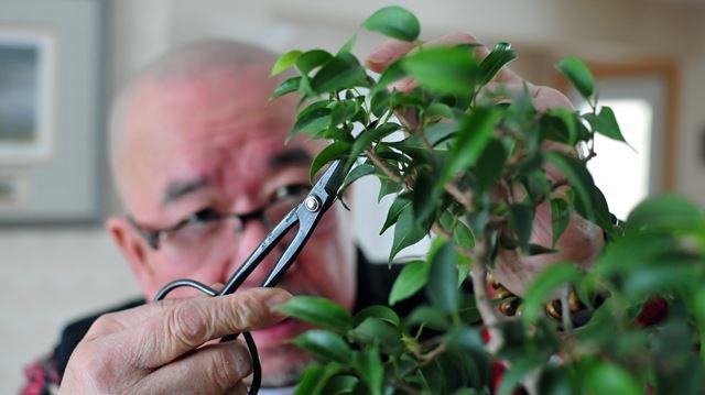 Bonsai Tree Kitchener Bonsai Tree