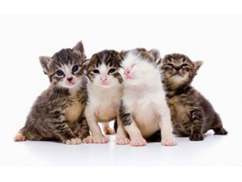 Kitten vaccinations – why, when, and what they involve